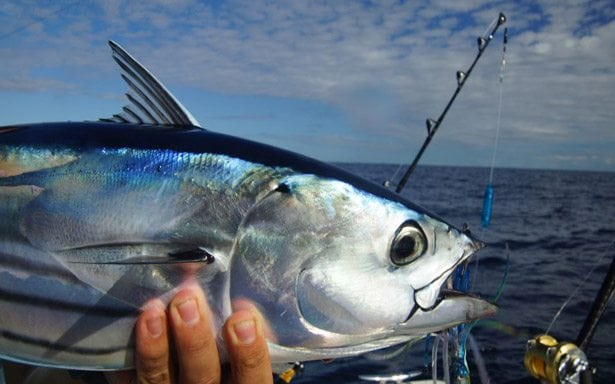Catching Skipjack Costa Rica